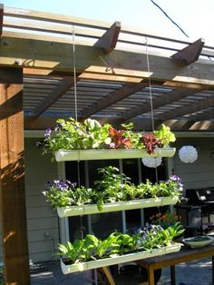29 Best Apartment Vegetable Gardening Ideas Images