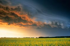 Canola and storm clouds near Red Deer, Alberta, Canada