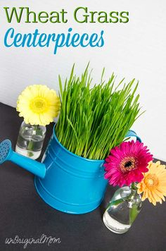 Make wheat grass centerpieces for your next party - includes an easy tutorial!