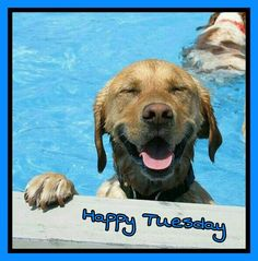 Happy Tuesday Lucky Puppy Funny Dogs Funny Memes Doggie Pool Puppy Pool