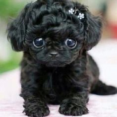 this puppy has the cutest eyes ever!