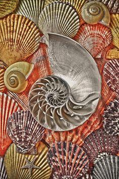 Chambered Nautilus Shell Abstract Photograph - Chambered Nautilus Shell Abstract Fine Art Print