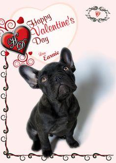 Dog Days, French Bulldog, Happy, Dogs, Animals, Animales, Animaux, French Bulldog Shedding, Pet Dogs