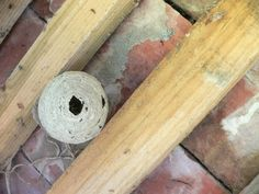 https://flic.kr/p/nX2QgT   P2730064c (PaperBark q) Wasp Nest ... In the roof of our front porch .. Might it be re-used ..q   NB Pre Mod!!!!
