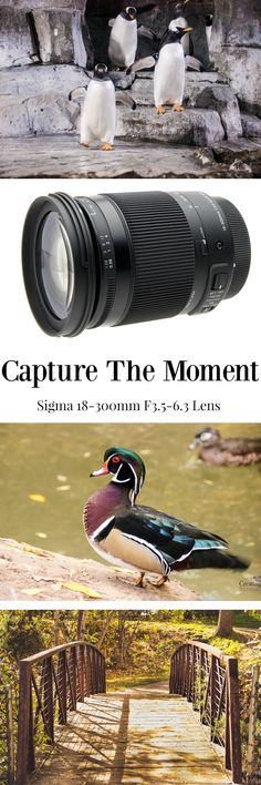 Don't miss the meaningful moments because you were unprepared! Discover how to capture the moment with the Sigma lens for all family events
