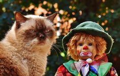This cat went angry after finding boy doll. The cat thought he was real...