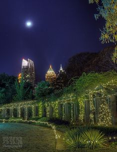 City Nights, Garden Lights And Moonlight . The Atlanta Botanical Gardens,  Adjacent To Piedmont Park In Midtown Atlanta, GA.