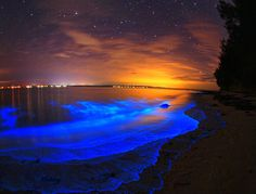 Bioluminescent plankton wash up on a beach in Jervis Bay.  The Jervis Bay Territory is a territory of the Commonwealth of Australia