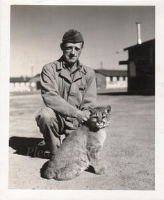 Vintage Photo    WWII Army soldier with cougar cub by photopicker