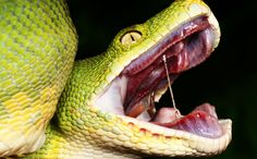 Terrifying Facts About Snakes That Will Give You Nightmares