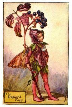 dogwood-flower-fairy-print-cicely-mary-barker
