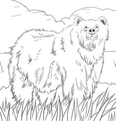 Oso Negro Realista Dibujo para colorear  animales  Pinterest