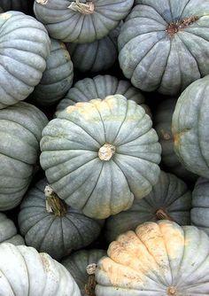 Blue Pumpkins!, my favourite!!!