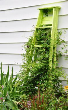 Paint a ladder as a trellis.