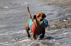 Чемпионат по собачьему серфингу.
