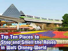 Top Ten Places to Stop and Smell the Roses in Walt Disney World