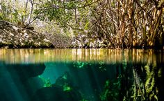 """""""At the intersection of land and sea, mangrove supports a wealth of life and may be more important to the health of the planet than we ever realized"""" #NaturalWonder   Photo by Osomoso."""