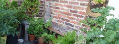 Balkon nejen k nakousnutí FB Plants, Balcony, Plant, Planets