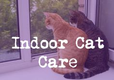 Indoor Cat Care - http://wp.me/p6FcxI-iZ