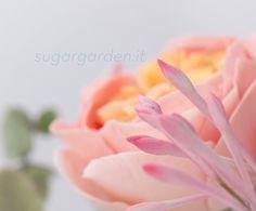 Garden Roses & Madagascar Jasmines