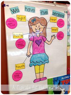 A Cupcake for the Teacher: Five Senses Fun