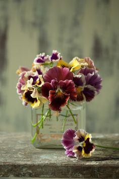Vintage perfume bottle blooming with pansies
