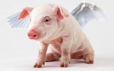 Flying Pigs? | endlesswonder1