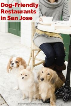 If you're in the mood to dine out, feel free to take your canine companion with you and visit one of these 36 dog-friendly restaurants in San Jose. http://www.heavenlygreens.com/blog/dog-friendly-restaurants-in-san-jose @heavenlygreens