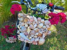 Bicycle built for seashells