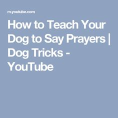 How to Teach Your Dog to Say Prayers | Dog Tricks - YouTube