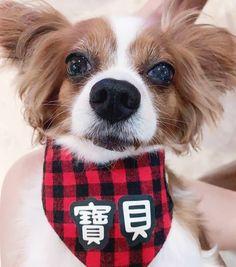 Singapore | Dog Harness | Personalized Dog Bandana | Custom Bowtie Cat Bow Tie, Bandana Bib, Pet Tags, Dog Harness, Dog Accessories, Singapore, Dog Cat, Pets, Animals