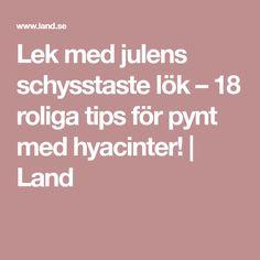 Lek med julens schysstaste lök – 18 roliga tips för pynt med hyacinter! | Land