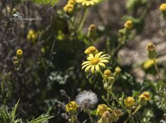 http://www.greeneratravel.com/ Trip Deals - margarita 4