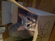 """""""Cat in a box""""  i loved to play in fridge boxes when i was little ... so entertaining :D"""