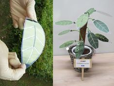 A new type of solar cell technology using organic thin-film solar cells with a clear plastic protective coating is allowing environmental engineers to design imitation houseplants that are green - in more ways than one!  #Science