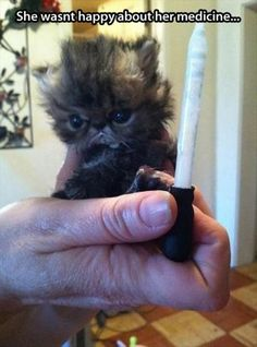 Attack Of The Funny Animals - 35 Pics   * most adorable kitty :-)  *