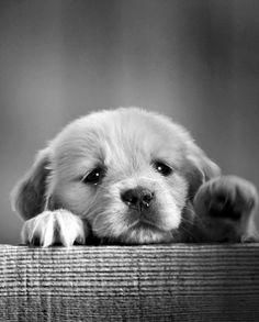 17 Amazing Puppies which will make your day.
