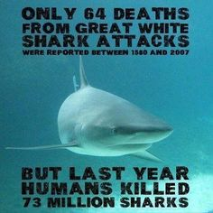 """It's just sad! People need to learn that sharks aren't """"Jaws"""""""