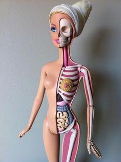 Jason Freeny : Anatomical Barbie/バービーの人体模型 | Sumally