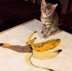 "370 Likes, 3 Comments - I take care of bananart (@banananny) on Instagram: ""My dream life find your kind of  @banananny #embroidery #kitten #myfav #heels #beauty #kitty #cat #artwork #visualoftheday #creativity #banananny #bananart #fruitart #loveit #picsart #mystyle #lifestylebloggers #soul #picoftheday #chic #foodoftheday #instaartist #picture #foodporn #bananagram #bananafamily  Wanna feature your  art here? Tagging #banananny on your"