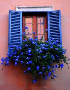 Beautiful blue shutters and blue flowers against salmon pink stucco walls.
