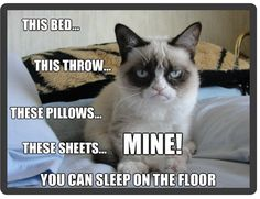 Funny Grumpy Cat Sleep On Floor Refrigerator / Locker Magnet Grumpy Cat Quotes, Funny Grumpy Cat Memes, Funny Cats, Funny Memes, Funny Quotes, Funny Minion, Humor Quotes, Memes Humor, Grumpy Cat Disney