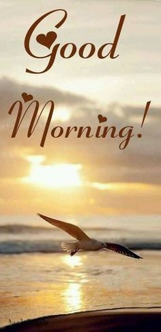 Good Morning Picture, Good Morning Flowers, Good Morning Friends, Good Morning Good Night, Morning Pictures, Good Night Quotes, Good Morning Images, Happy Morning, Morning Greetings Quotes