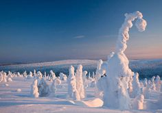 Centinelas del Ártico, Finlandia www.eliymaurolazy.com/network blog.eliymaurolazy.com
