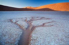 Trees of Deadvlei    by Hougaard Malan  I doubt there is a landscape in Southern African that has been photographed as much as the trees of Deadvlei, if something has been photographed that much then I have no desire to photograph it. Despite that, I found myself heading for deadvlei in January of 2011. Gate times at Sesriem aren't exactly accommodating towards photographers. They open 45-60 minutes before sunrise and then you have a 60 minute drive and a 20 minute walk to get to the dead…
