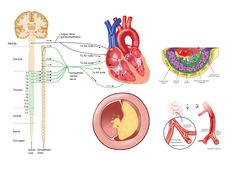 For a medical reference site Reference Site, Vectors, Medical, Map, Illustration, Medicine, Location Map, Illustrations, Maps