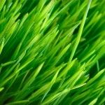 OutsidePride has a wide variety of grass seed available for purchase. We want to help you have the best looking lawn possible. Visit our website to find the perfect grass seed for your lawn! Sprinkler Repair, Sod Installation, Lawn Care Business, Shade Grass, Home Improvement Companies, Lawn Care Tips, Lawn Service, Lawn Maintenance, Herb Seeds