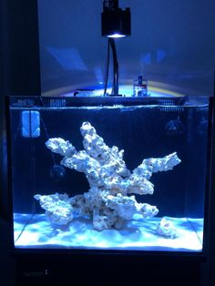 This is some good information on design of aquascaping if anyones interested. I'm going to use this info on my new tank. Reefs Magazine - Aesthetics of. Saltwater Aquarium Setup, Diy Aquarium, Aquarium Design, Saltwater Tank, Marine Aquarium, Aquarium Driftwood, Aquarium Ideas, Nano Reef Tank, Reef Tanks