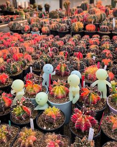 Spectacular photos of desert plants by Wachirapol Deeprom, a gifted self-taught photographer, and cactus lover currently based in Bangkok, Thailand. Growing Succulents, Cacti And Succulents, Cactus Plants, Local Photographers, Landscape Photographers, Borneo Rainforest, Succulent Gardening, Unusual Plants, Desert Plants