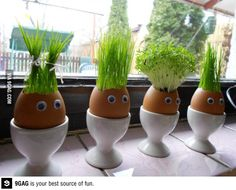 Buy grass seeds and grow them in egg shells... so cute!